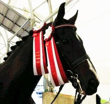314 J Nico championships (3)
