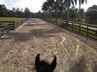 35 - Florida track and ears