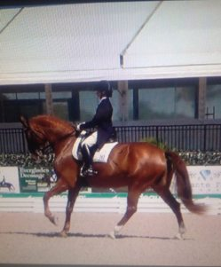 45 - Gem canter Florida from behind