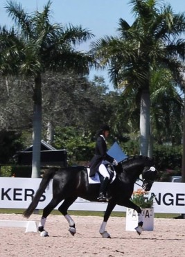 94 - Naima and Sancerre schooling trot (3)